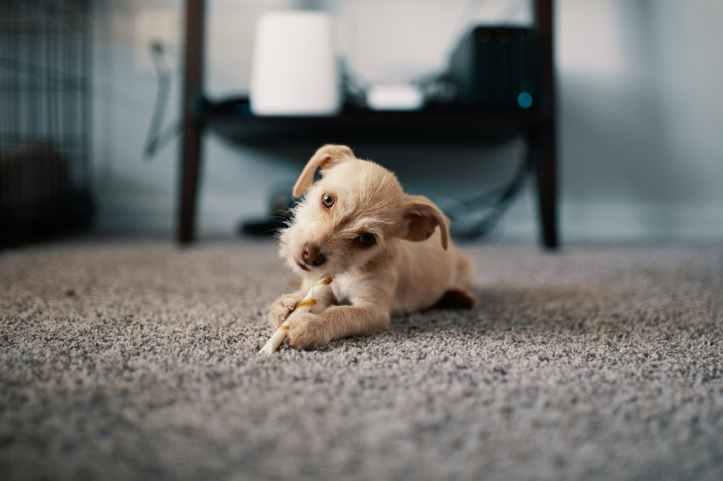 photo of puppy lying on carpet
